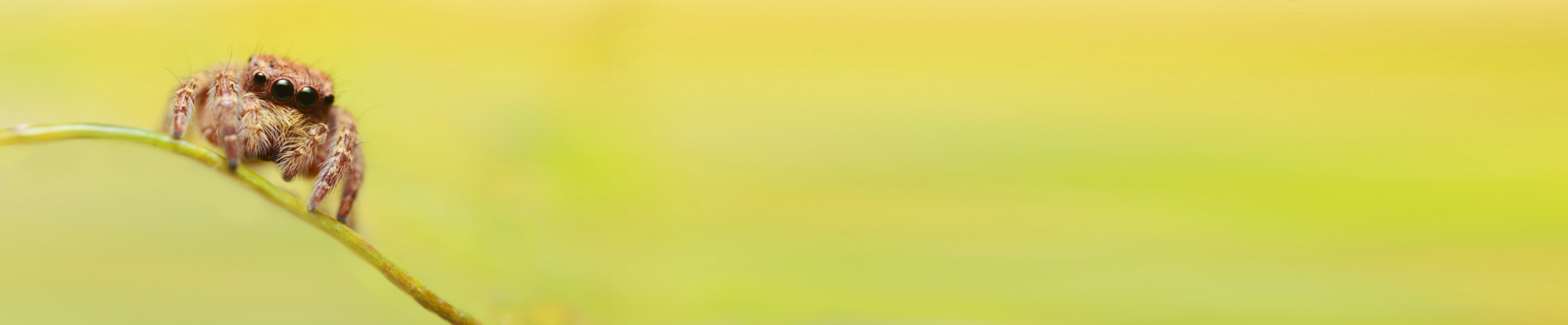 Pleiadi Science Farmer Educazione STEAM STEM scienza esperimenti laboratori imparare con le mani mostra interattiva progetto educativo infanzia adolescenti bambini eventi didattici scientifici scienza